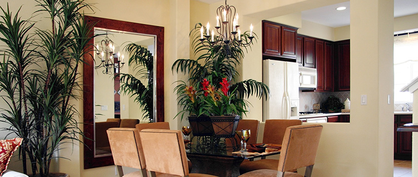 A stylish dining room with a table, six chairs, and a mirror. It's full of large plants and ferns, including one with red flowers.